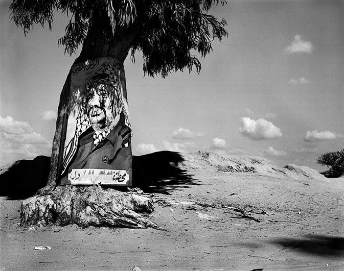 Arafat på træ