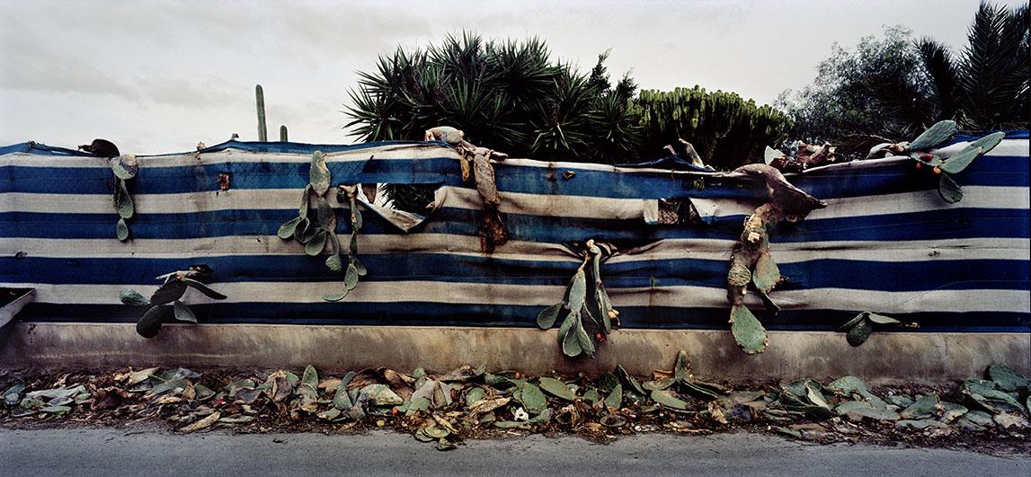 Kaktus gennem blå-hvid