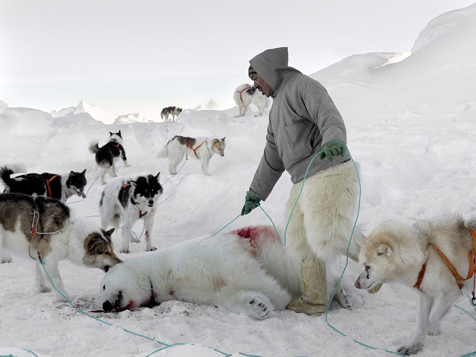 Markus with Polar Bear and Dogs, 2016